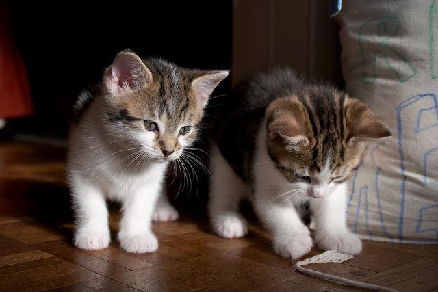 Kranz Cats
